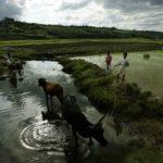 Madagascar : affrontements meurtriers à Marovitsika